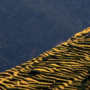 Nepal, terrazzamenti in quota lavorati per le coltivazioni