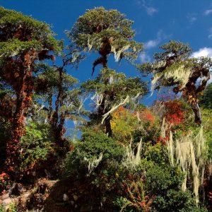 Natura florida in Bhutan