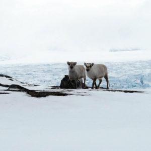 Una giornata uggiosa non viene sprecata, ed offre incontri piacevoli con queste sorelline del nord